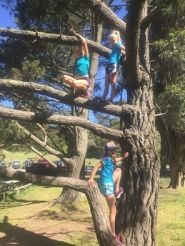 three girls in a tree