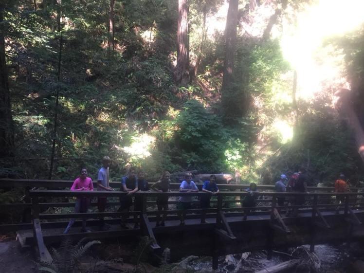 MYTR Muir Woods